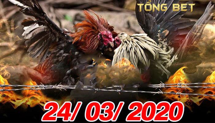 Coi đá gà Mỹ chiếu trực tiếp thứ 3 ngày 24/03/2020