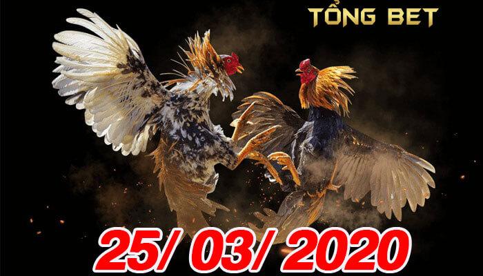 Trực tiếp đá gà cựa sắt ngày 25/03/2020 - Full Clip đá gà HD